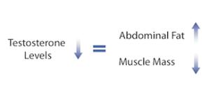 testosterone-fat-mass-and-muscle-mass1